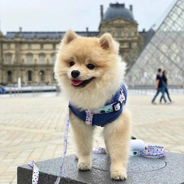 dog at the Louvre
