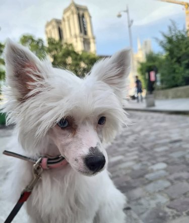 dog by notre dame