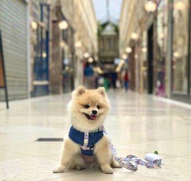 dog in Parisian gallery