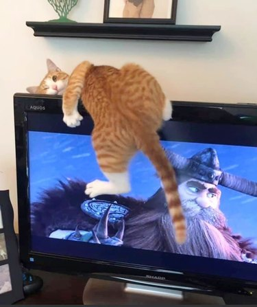 cat sleeping twisted on television