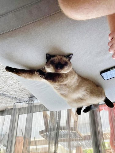 cat dreams about flying