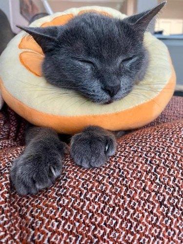 cat in orange neck cone