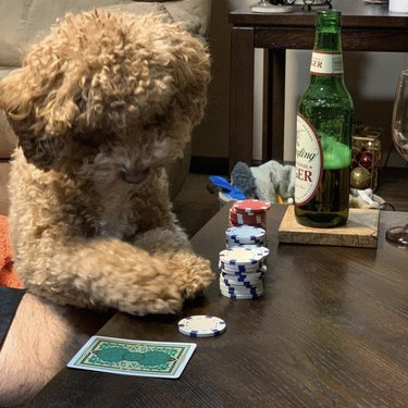 dog with chips and cards
