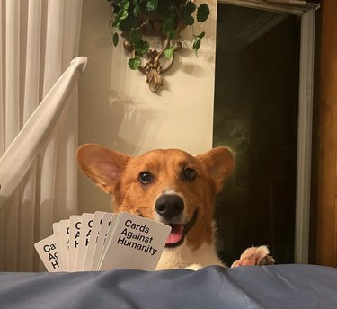 dog playing cards against humanity