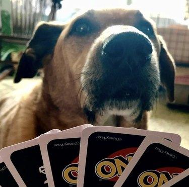 dog playing uno