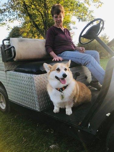 Woman and elderly corgi in utility cart