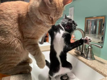 cats playing in sink