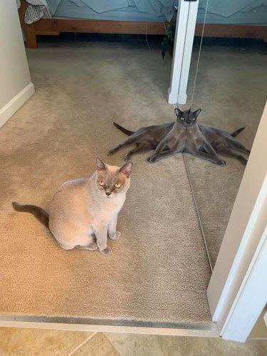 cat sits nexts to mirror