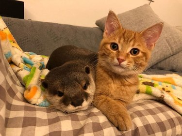 cat and otter are buddies