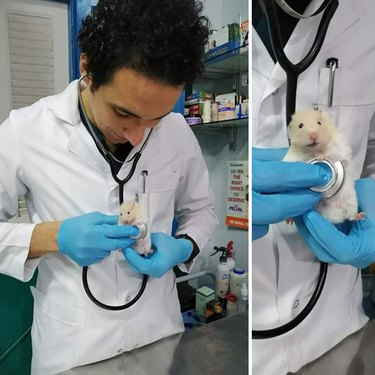 hamster gets heart checkup