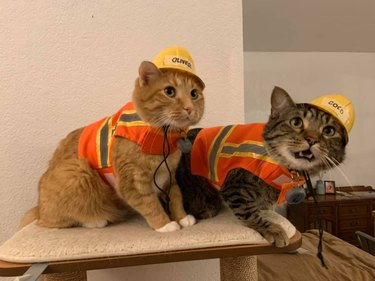 cats wearing safety vests and construction helmets