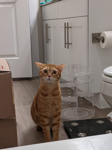 cat sees woman in the bath for first time