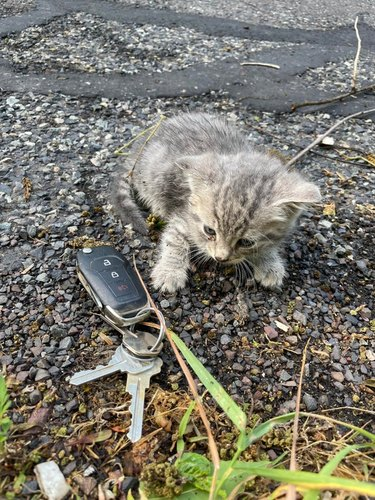 tiny kitten next to car keys