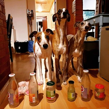 Three greyhounds standing behind a row of bottles
