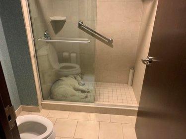 Dog sleeping in a shower