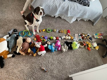 Dog posed with huge collection of toys
