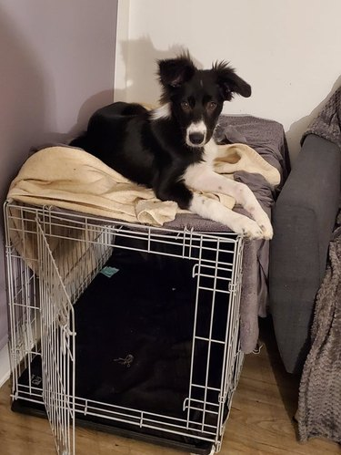 Dog sitting on top of crate