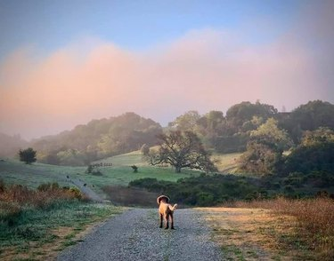 Dog standing on gravel road over rolling hills on cloudy day