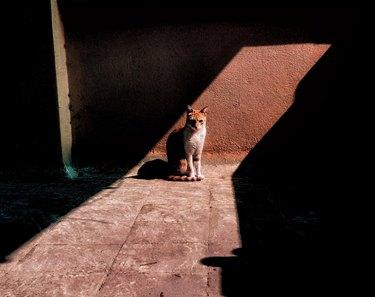 Cat sitting in defined strip of sunlight
