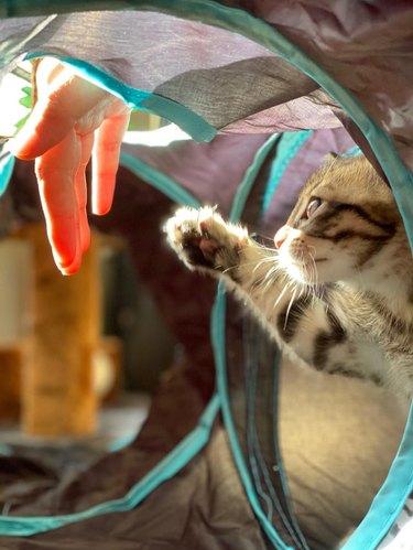 Kitten reaching a paw up to sunlit human hand