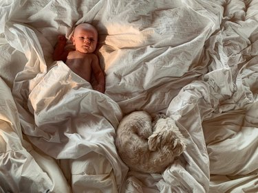 Baby and dog on fluffy white bedding