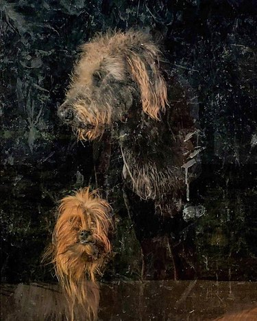 Two shaggy dogs looking through a dirty glass window