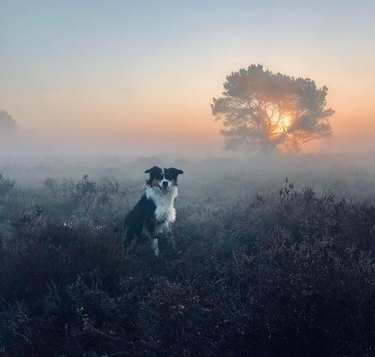 Dog sitting in foggy field of flowers at sunrise