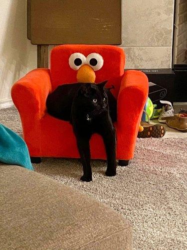 black cat in Elmo chair