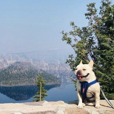 dog at crater lake national park