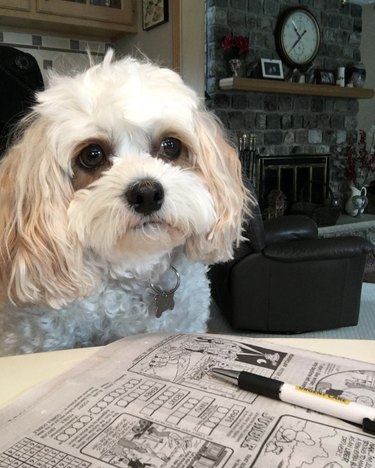 dog struggling to do a crossword puzzle