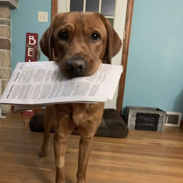 dog holding newspaper in its mouth