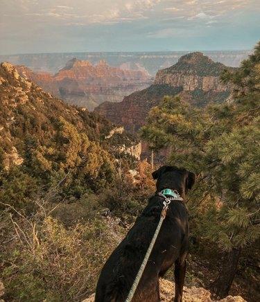 dog at grand canyon national park