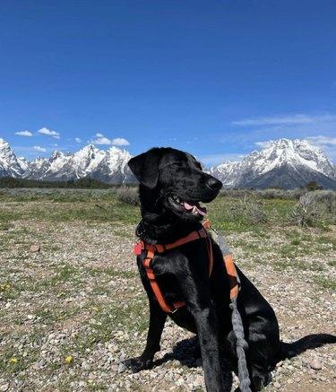 dog at grand teton national park