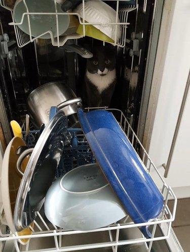 Cat sitting inside dishwasher