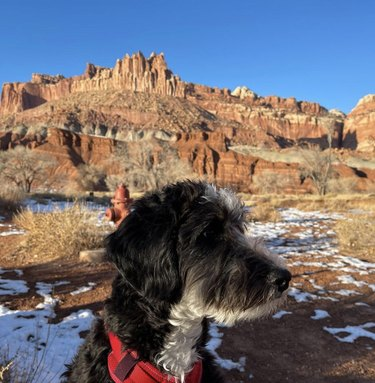 dog at capitol reef national park