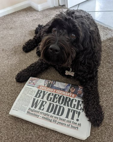dog with newspaper in front of it