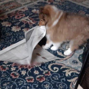 dog tearing up a newspaper