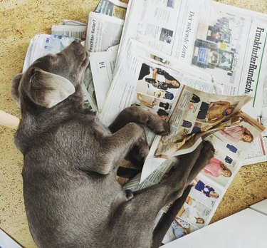 dog lying in a pile of newspapers