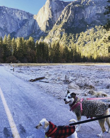 two dogs at yosemite national park