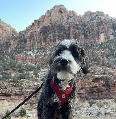 dog at zion national park