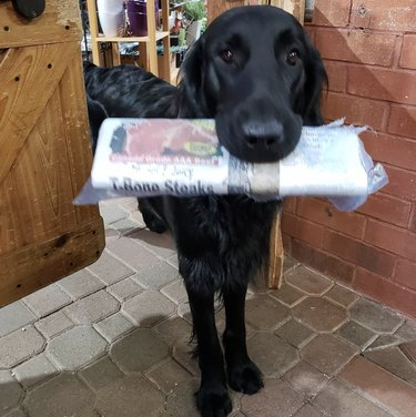 dog with newspaper in its mouth