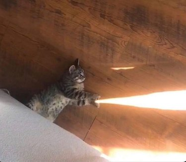 Cat with its paws around a beam of sunlight on the floor