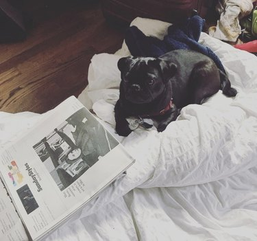dog on bed with newspaper