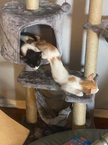 cat slinks off cat tower