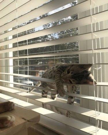 cat sleeps on window blinds