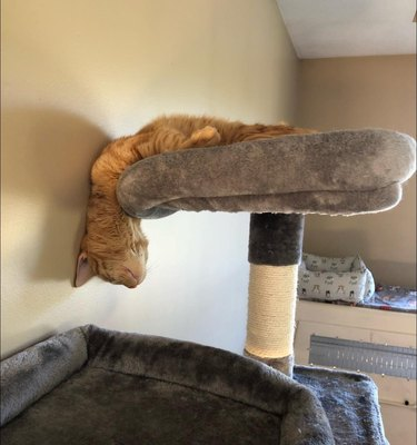cat sleeps with head leaning over cat tower