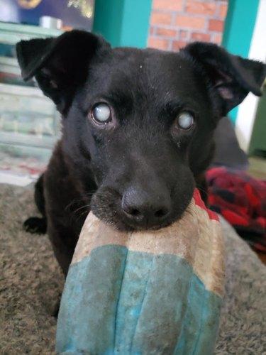 senior dog adopted at age 12