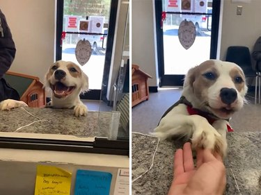 dog says goodbye to shelter staff