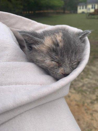 kitten sleeps in hood of sweatshirt