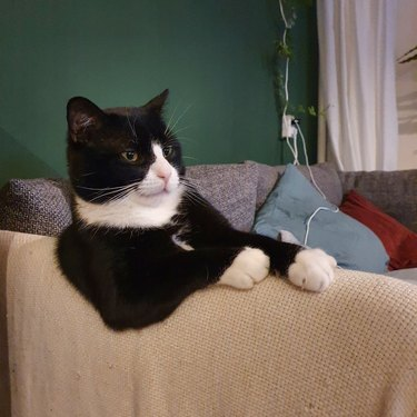 adopted cat sits like human on couch